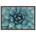 Blue Agave Succulent Framed Canvas Wraps