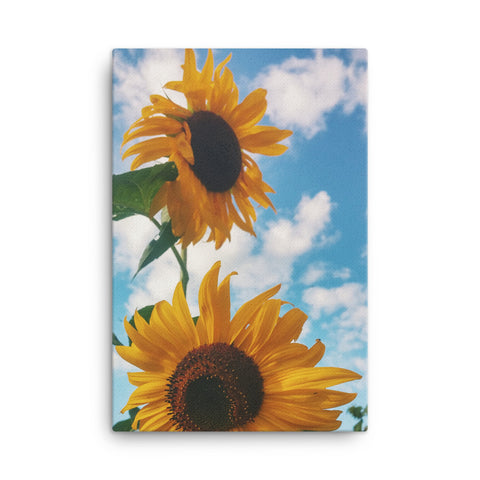 Sunflower Canvas Wraps