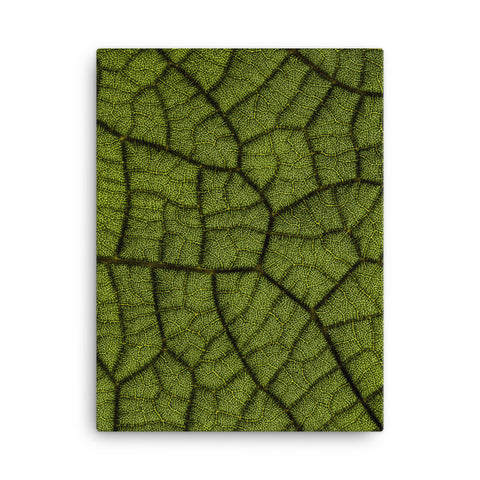 Leaf Anatomy Canvas Wraps