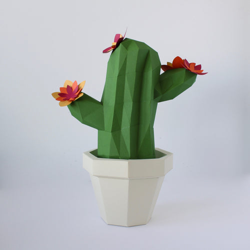 Cactus Kit - Low Poly Crafts