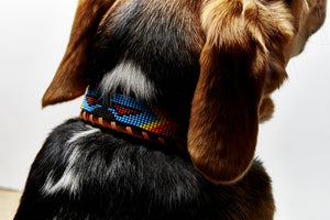Rainbow Skybird Beaded collar on dog