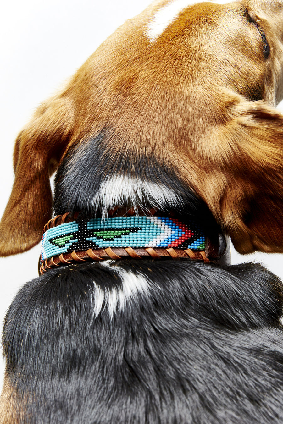 Turquoise Skybird beaded dog collar