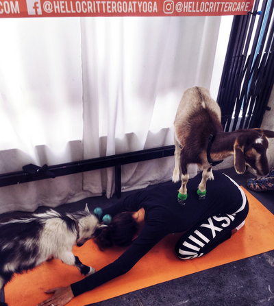 SAVI Fitness - Goat Yoga was everything I've hoped for and so much more!