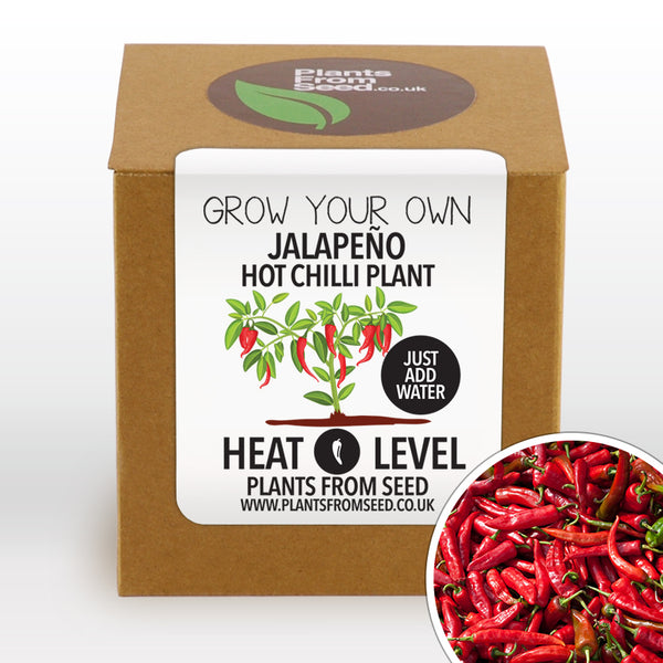 Grow Your Own Jalapeño Chilli Plant Kit