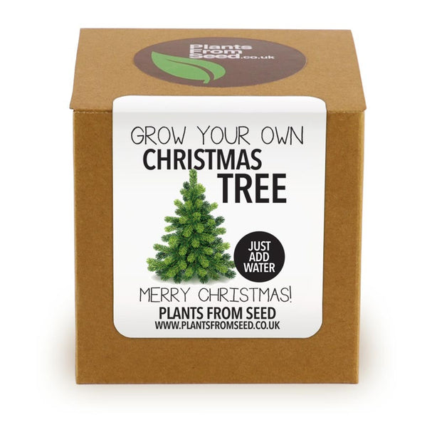 Grow Your Own Christmas Tree Plant Kit