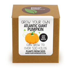 Grow Your Own Giant Atlantic Pumpkin Plant Kit