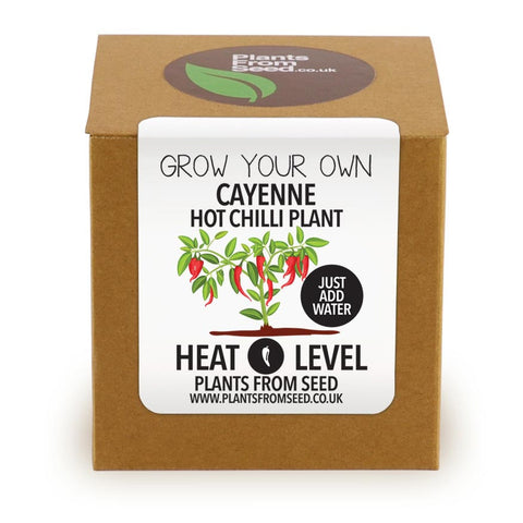 Grow Your Own Cayenne Chilli Plant Kit