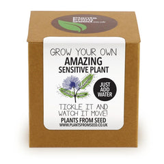Grow Your Own Sensitive Plant Kit