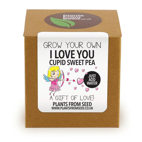 Grow Your Own Cupid Sweet Pea Plant Kit