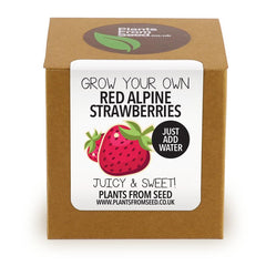 Grow Your Own Red Strawberries Plant Kit