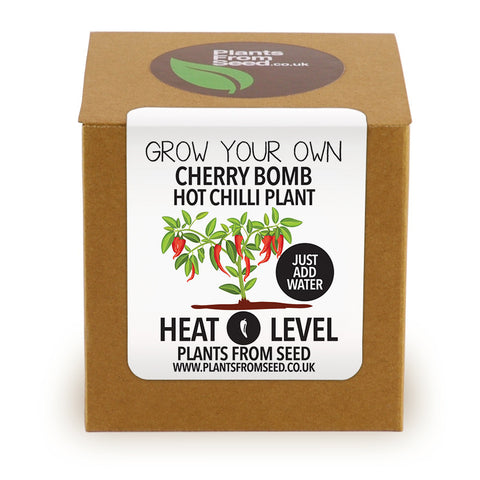 Grow Your Own Cheery Bomb Chilli Plant Kit
