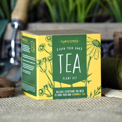 Grow Your Own Camomile Tea Plant Kit