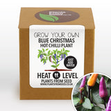 Grow Your Own Blue Christmas Chilli Plant Kit