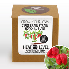 Grow Your Own 7 Pot Brain Strain Chilli Plant Kit
