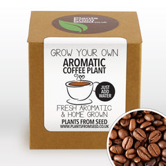 Grow Your Own Arabica Coffee Plant Kit