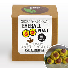 Grow Your Own Eyeball Flowers Plant Kit
