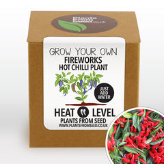 Grow Your Own Fireworks Chilli Plant Kit