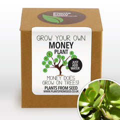 Grow Your Own Money Tree Plant Kit