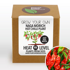 Grow Your Own Naga Morich Chilli Plant Kit