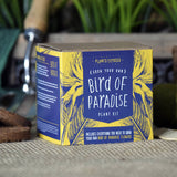 Grow Your Own Bird Of Paradise Plant Kit