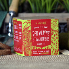 Grow Your Own Red Alpine Strawberries Kit