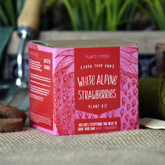 Grow Your Own White Alpine Strawberries Kit