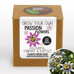 Grow Your Own Passion Flowers Plant Kit