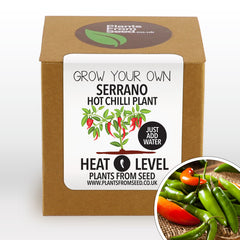 Grow Your Own Serrano Chilli Plant Kit