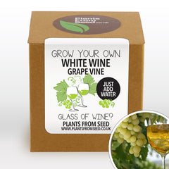 Grow Your Own White Grape Plant Kit