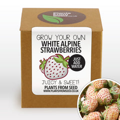 Grow Your Own White Strawberries Plant Kit