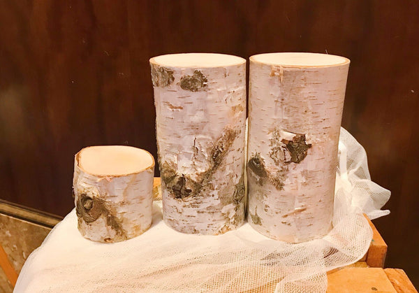 Birch tree trunk slices