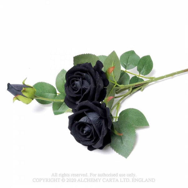 Black Rose Spray