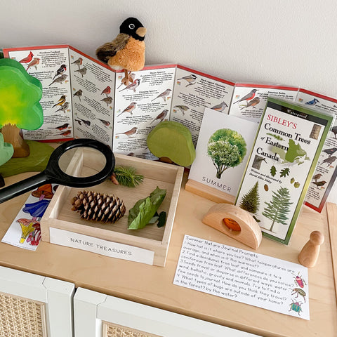 nature table set up on top of the bookshelf. Sibley nature guides along with wooden trees and toys decorate the shelf. There is a tray with a pinecone and leaves with a magnifying glass. Printable parts are showcased on the table. There is also a miniature folkmanis robbin puppet. 
