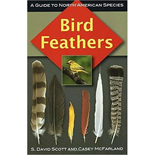 Bird Feathers - a Guide to North American Bird Species