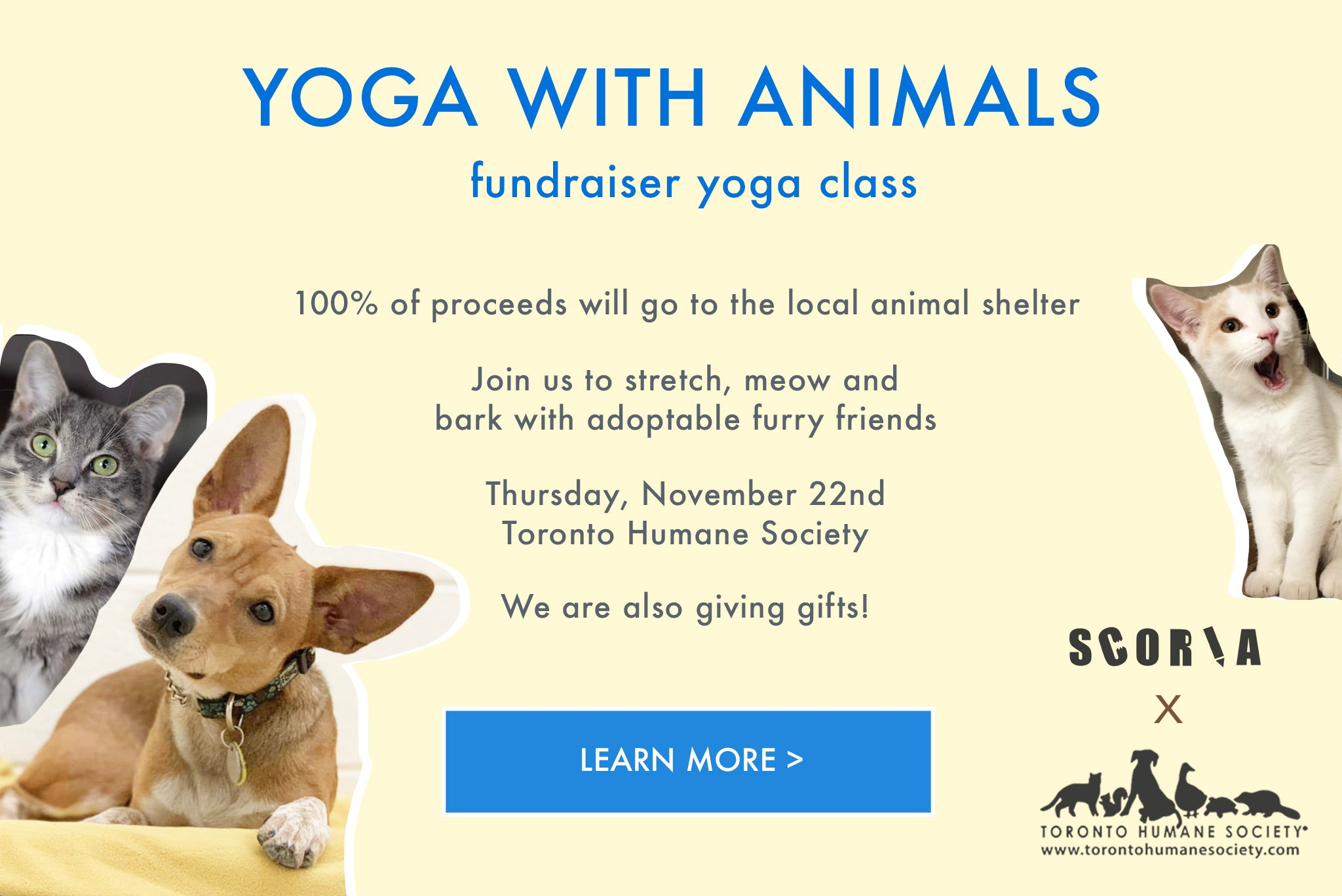 Toronto Humane Society Yoga with Dogs and animals from the shelter with Scoria Cork Yoga Mats Yoga