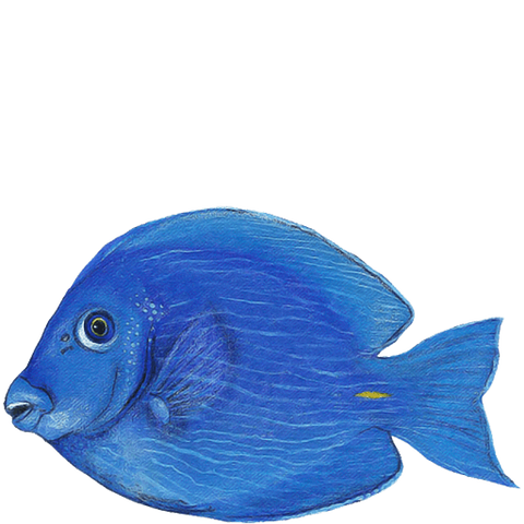 Blue Tang Sea Life Animal Wall Decal Sticker
