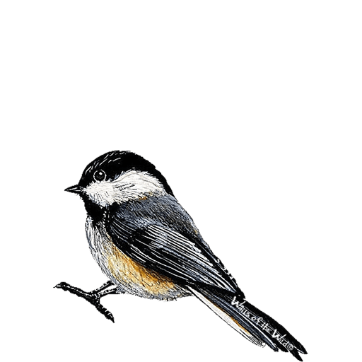 Chickadee Bird Animal Wall Decal Sticker
