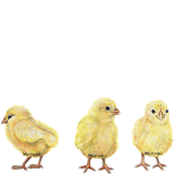 Chicks Farm Animals Wall Decal Sticker