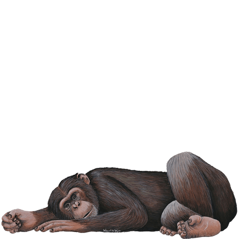 Chimpanzee Jungle Animal Wall Decal Sticker