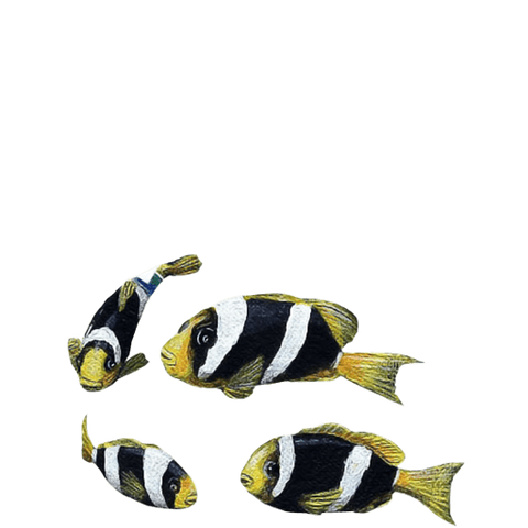 Yellowtail Clownfish Sea Life Wall Decal Sticker