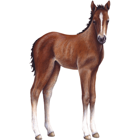 Foal Farm Animal Wall Decal Sticker