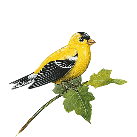 Goldfinch Bird Animal Wall Decal Sticker