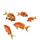 Goldfish Sea Life Wall Decal Sticker
