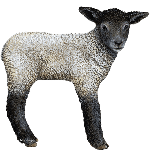 Lamb Farm Animal Wall Decal Sticker