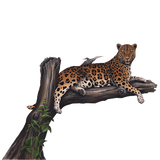 Leopard In a Tree Jungle Wall Decal Sticker