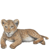 Lion Cub Jungle Animal Wall Decal Sticker
