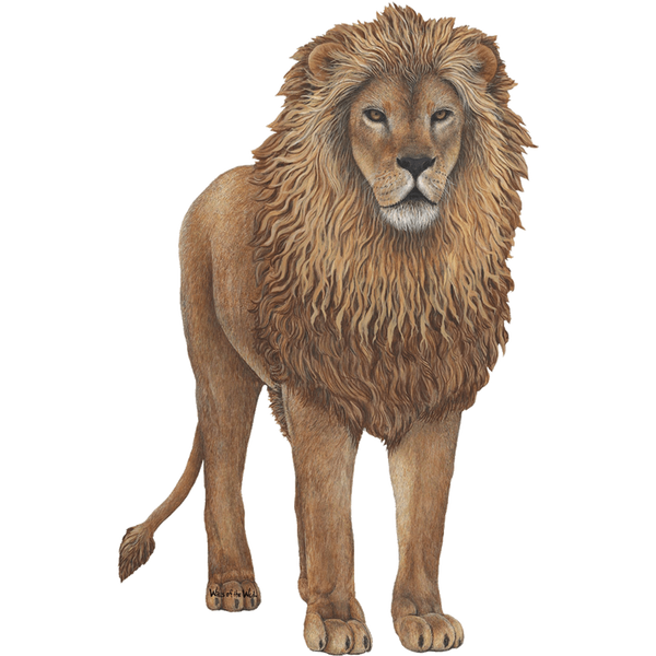 Lion Jungle Animal Wall Decal Sticker