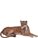 Lioness Jungle Animal Wall Decal Sticker