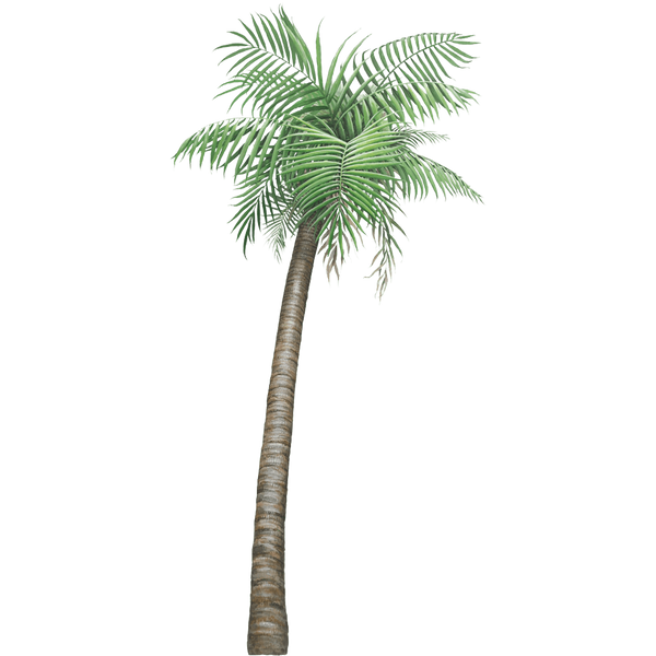 Palm Tree Jungle Wall Decal Sticker
