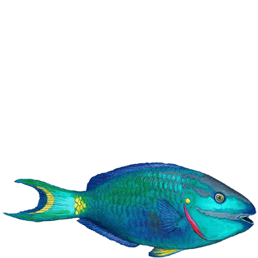 Parrotfish Sea Life Wall Decal Sticker